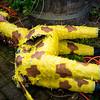 Dead giraffe