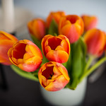 The beautiful tulips!